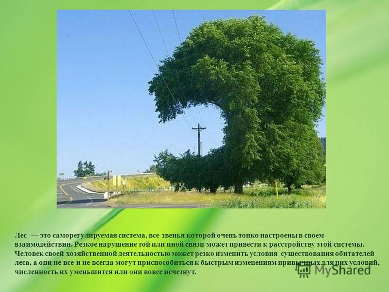 Лес это саморегулируемая система, все звенья которой очень тонко настроены в своем взаимодействии. Резкое нарушение той или иной связи может привести к расстройству этой системы. Человек своей хозяйственной деятельностью может резко изменить условия