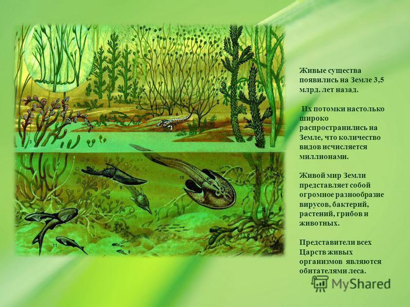 Живые существа появились на Земле 3,5 млрд. лет назад. Их потомки настолько широко распространились на Земле, что количество видов исчисляется миллионами. Живой мир Земли представляет собой огромное разнообразие вирусов, бактерий, растений, грибов и