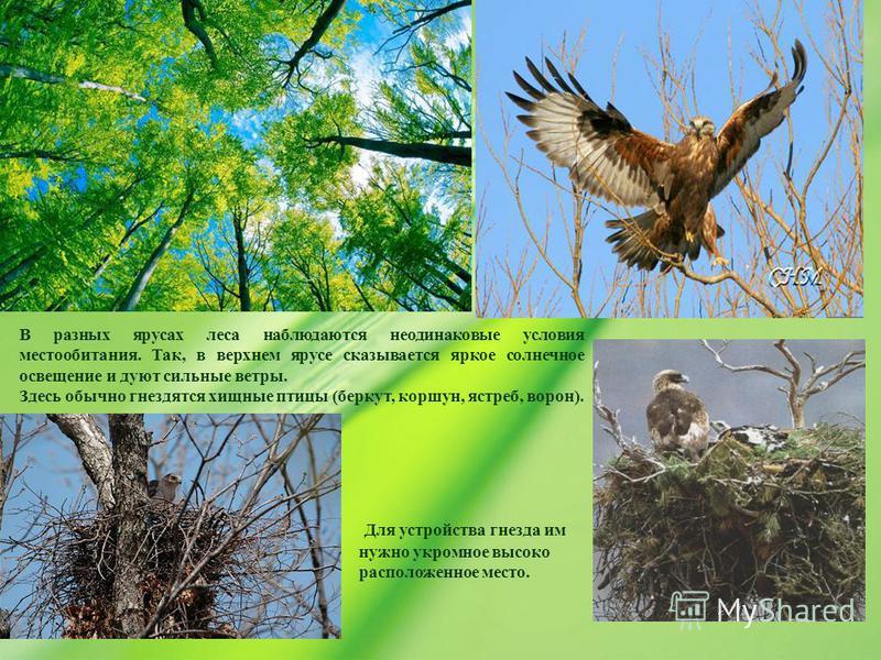 В разных ярусах леса наблюдаются неодинаковые условия местообитания. Так, в верхнем ярусе сказывается яркое солнечное освещение и дуют сильные ветры. Здесь обычно гнездятся хищные птицы (беркут, коршун, ястреб, ворон). Для устройства гнезда им нужно