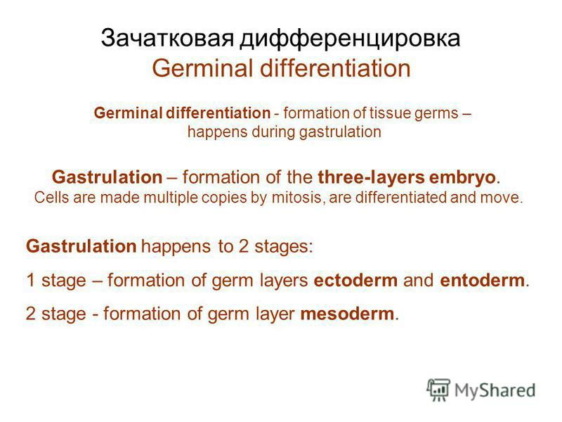 Зачатковая дифференцировка Germinal differentiation Gastrulation happens to 2 stages: 1 stage – formation of germ layers ectoderm and entoderm. 2 stage - formation of germ layer mesoderm. Gastrulation – formation of the three-layers embryo. Cells are
