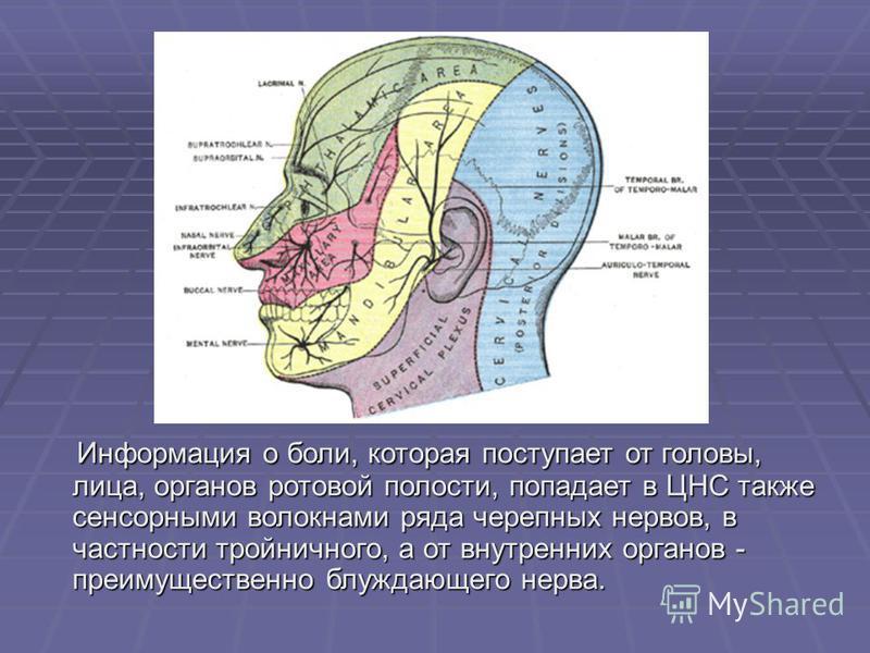 Информация о боли, которая поступает от головы, лица, органов ротовой полости, попадает в ЦНС также сенсорными волокнами ряда черепных нервов, в частности тройничного, а от внутренних органов - преимущественно блуждающего нерва. Информация о боли, ко