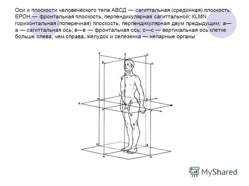 Оси и плоскости человеческого тела АВСД сагиттальная (срединная) плоскость; ЕРОН фронтальная плоскость, перпендикулярная сагиттальной; КLМN горизонтальная (поперечная) плоскость, перпендикулярная двум предыдущим; а а сагиттальная ось; вв фронтальная