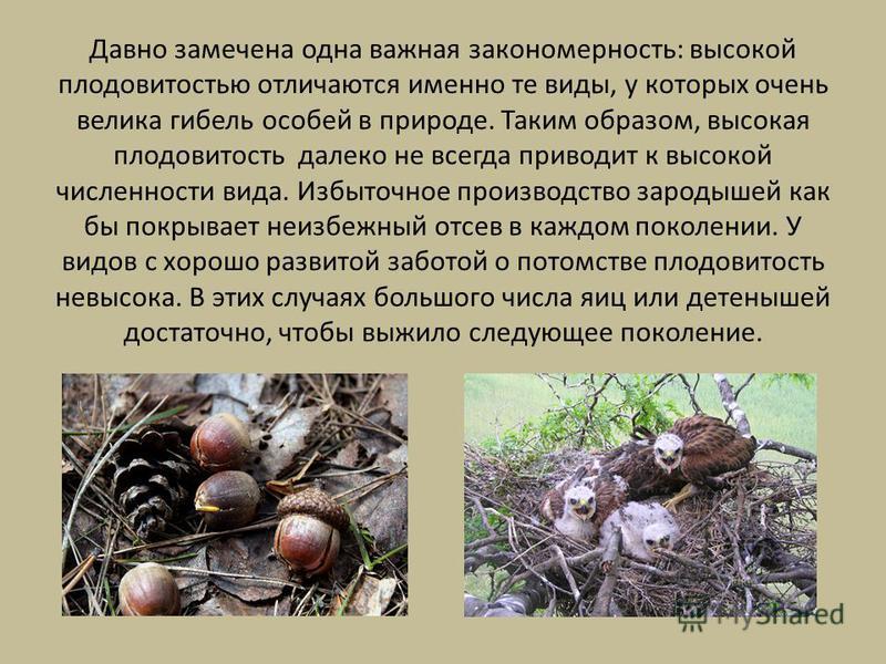 Давно замечена одна важная закономерность: высокой плодовитостью отличаются именно те виды, у которых очень велика гибель особей в природе. Таким образом, высокая плодовитость далеко не всегда приводит к высокой численности вида. Избыточное производс