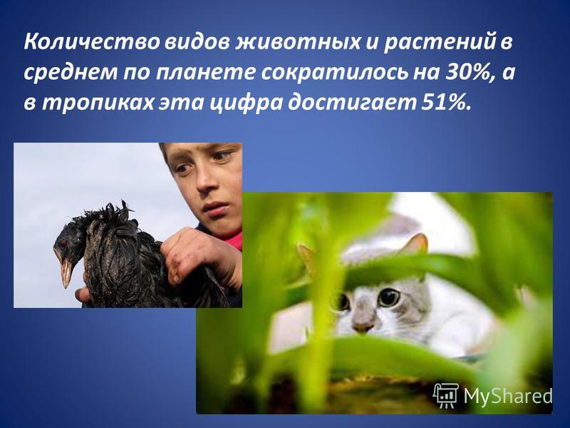 Количество видов животных и растений в среднем по планете сократилось на 30%, а в тропиках эта цифра достигает 51%.