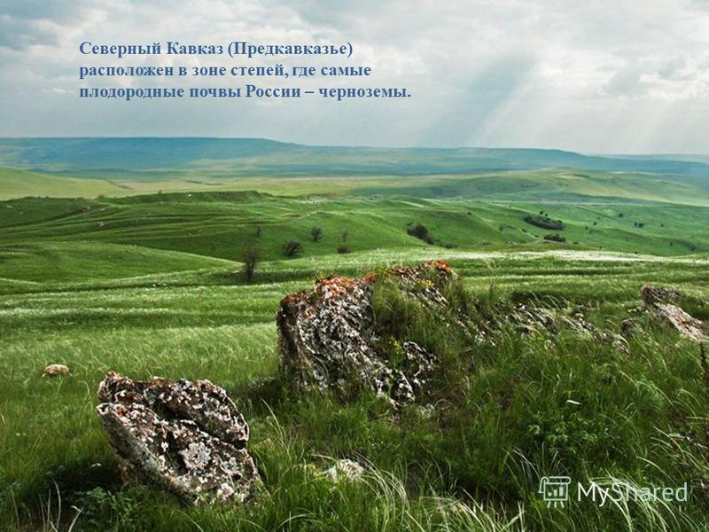 Северный Кавказ (Предкавказье) расположен в зоне степей, где самые плодородные почвы России – черноземы.