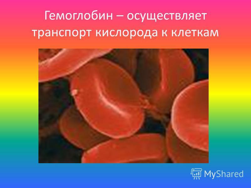 Гемоглобин – осуществляет транспорт кислорода к клеткам