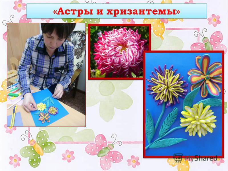 «Астры и хризантемы»