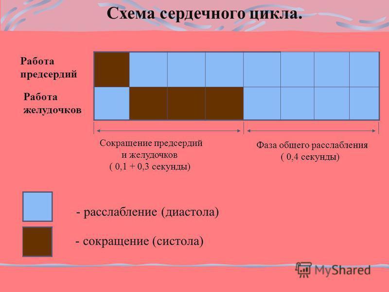 Схема сердечного цикла. Работа предсердий Работа желудочков - расслабление (диастола) - сокращение (систола) Фаза общего расслабления ( 0,4 секунды) Сокращение предсердий и желудочков ( 0,1 + 0,3 секунды)