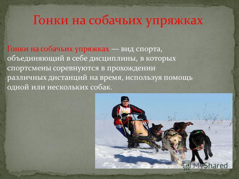 Гонки на собачьих упряжках Гонки на собачьих упряжках вид спорта, объединяющий в себе дисциплины, в которых спортсмены соревнуются в прохождении различных дистанций на время, используя помощь одной или нескольких собак.
