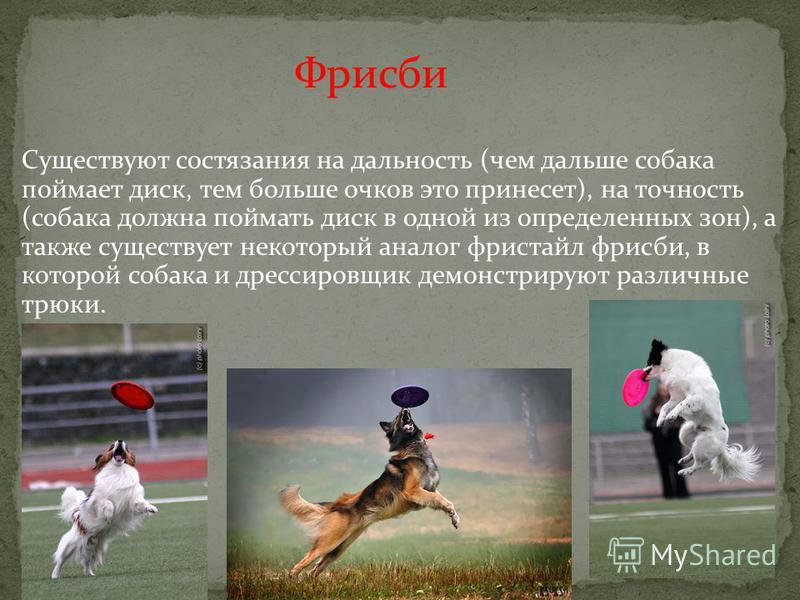 Фрисби Существуют состязания на дальность (чем дальше собака поймает диск, тем больше очков это принесет), на точность (собака должна поймать диск в одной из определенных зон), а также существует некоторый аналог фристайл фрисби, в которой собака и д