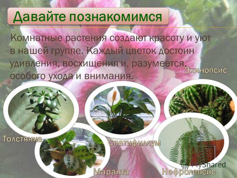 Комнатные растения создают красоту и уют в нашей группе. Каждый цветок достоин удивления, восхищения и, разумеется, особого ухода и внимания. Давайте познакомимся