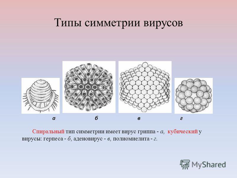 Типы симметрии вирусов абвг Спиральный тип симметрии имеет вирус гриппа - а, кубический у вирусы: герпеса - б, аденовирус - в, полиомиелита - г.