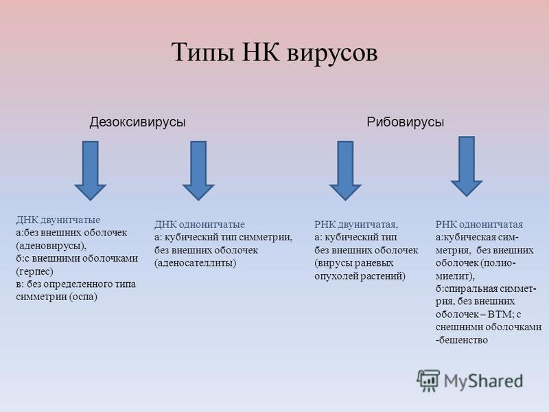 Типы НК вирусов Дезоксивирусы Рибовирусы ДНК двунитчатые а:без внешних оболочек (аденовирусы), б:с внешними оболочками (герпес) в: без определенного типа симметрии (оспа) ДНК однонитчатые а: кубический тип симметрии, без внешних оболочек (аденосателл