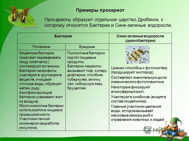 Примеры прокариот Прокариоты образуют отдельное царство Дробянки, к которому относятся Бактерии и Сине-зеленые водоросли.. Бактерии Сине-зеленые водоросли (цианобактерии) Полезные Вредные Цианеи способны к фотосинтезу (продуцируют кислород). Составля