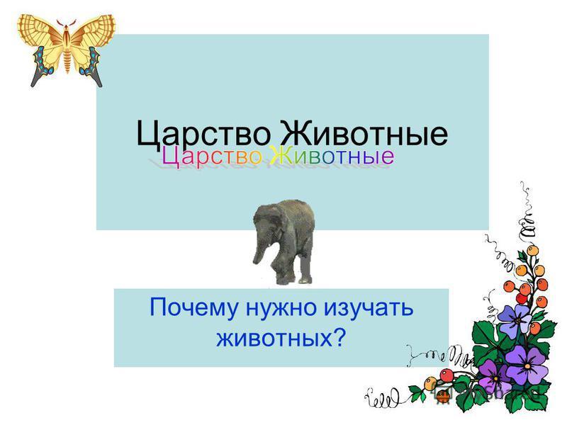 Царство Животные Почему нужно изучать животных?