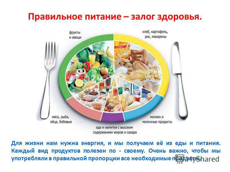 Правильное питание – залог здоровья. Для жизни нам нужна энергия, и мы получаем её из еды и питания. Каждый вид продуктов полезен по - своему. Очень важно, чтобы мы употребляли в правильной пропорции все необходимые продукты.
