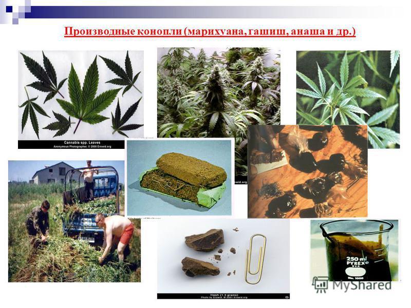 Производные конопли (марихуана, гашиш, анаша и др.)