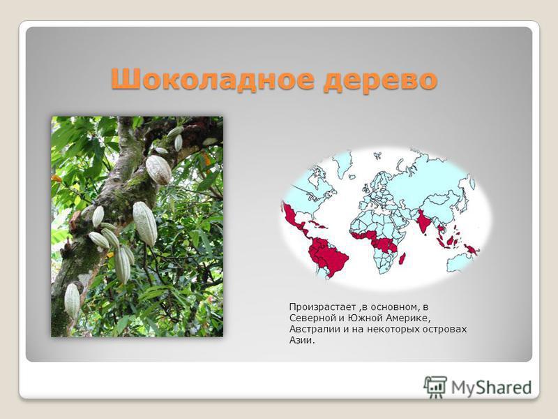 Шоколадное дерево Шоколадное дерево Произрастает,в основном, в Северной и Южной Америке, Австралии и на некоторых островах Азии.