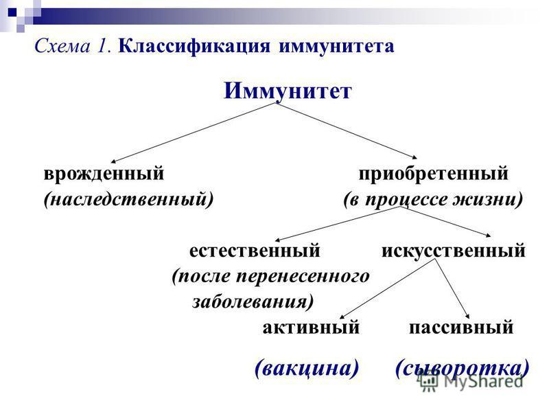 Иммунитет врожденный приобретенный (наследственный) (в процессе жизни) естественный искусственный (после перенесенного заболевания) активный пассивный Схема 1. Классификация иммунитета (вакцина) (сыворотка)