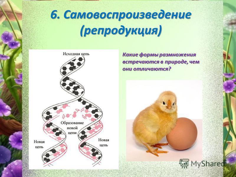 6. Самовоспроизведение (репродукция) Какие формы размножения встречаются в природе, чем они отличаются?