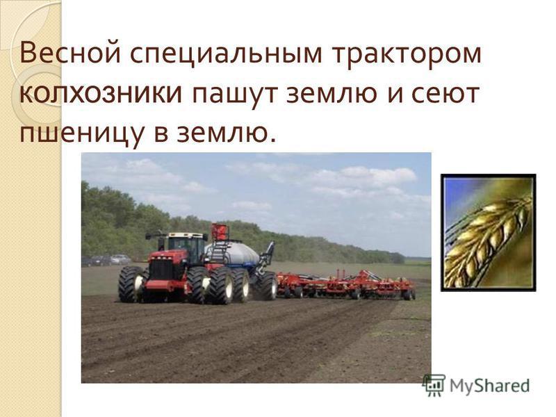 Весной специальным трактором колхозники пашут землю и сеют пшеницу в землю.