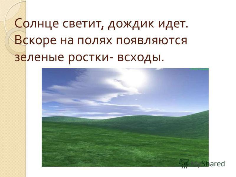 Солнце светит, дождик идет. Вскоре на полях появляются зеленые ростки - всходы.