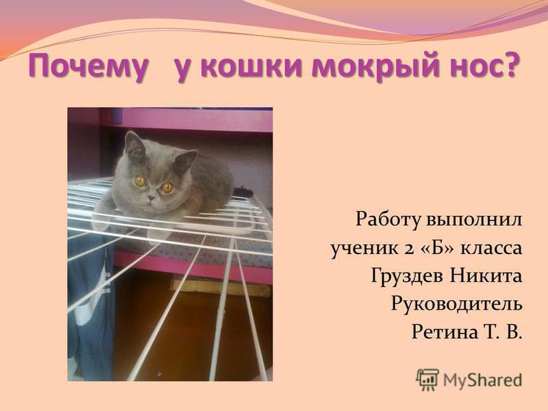 Почему у кошки мокрый нос? Работу выполнил ученик 2 «Б» класса Груздев Никита Руководитель Ретина Т. В.