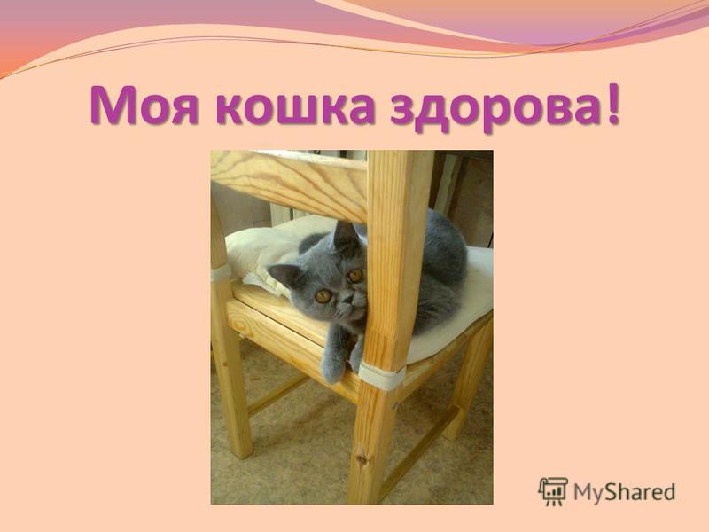 Моя кошка здорова!