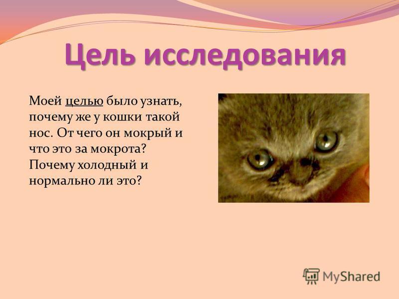 Цель исследования Моей целью было узнать, почему же у кошки такой нос. От чего он мокрый и что это за мокрота? Почему холодный и нормально ли это?