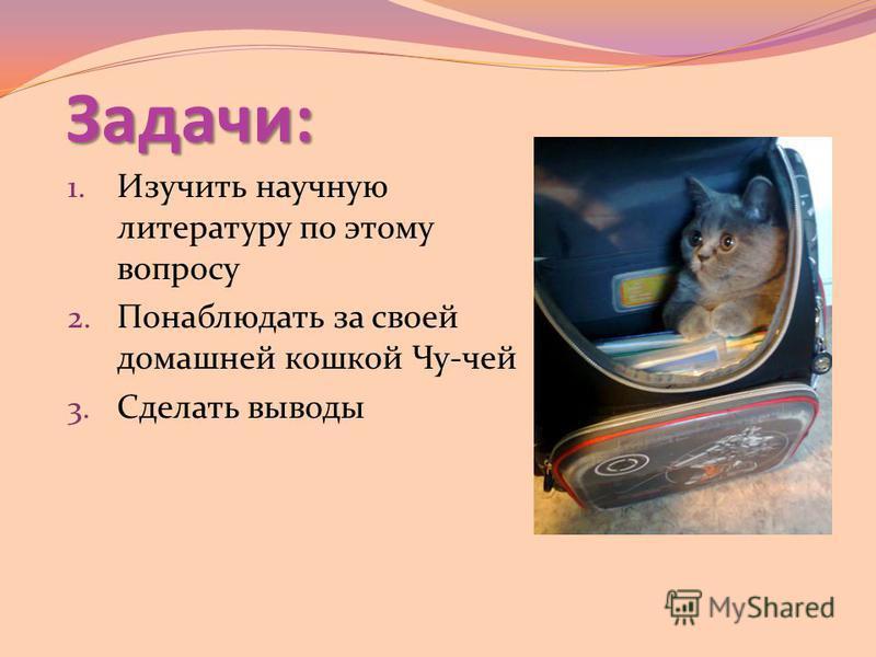 Задачи: 1. Изучить научную литературу по этому вопросу 2. Понаблюдать за своей домашней кошкой Чу-чей 3. Сделать выводы