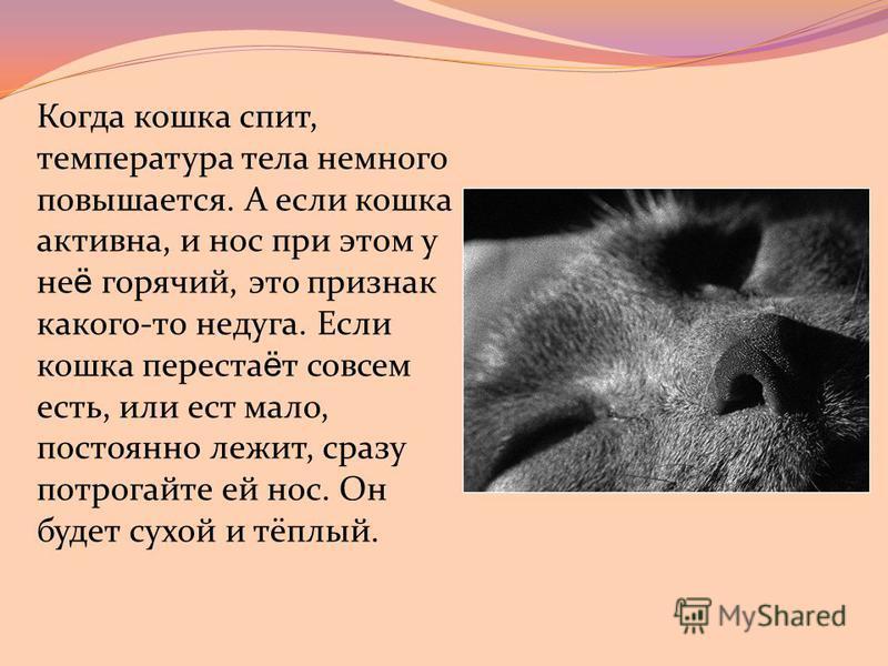 Когда кошка спит, температура тела немного повышается. А если кошка активна, и нос при этом у не ё горячий, это признак какого-то недуга. Если кошка перестаёт совсем есть, или ест мало, постоянно лежит, сразу потрогайте ей нос. Он будет сухой и тёплы