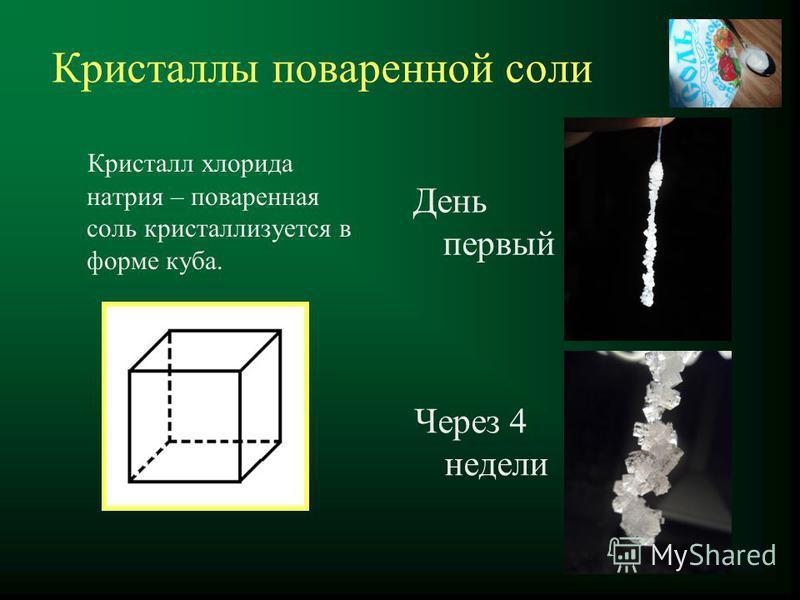 Кристаллы поваренной соли Кристалл хлорида натрия – поваренная соль кристаллизуется в форме куба. День первый Через 4 недели