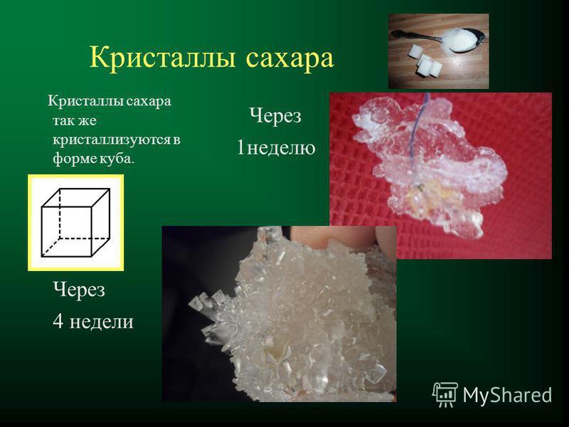 Кристаллы сахара Кристаллы сахара так же кристаллизуются в форме куба. Через 1 неделю Через 4 недели
