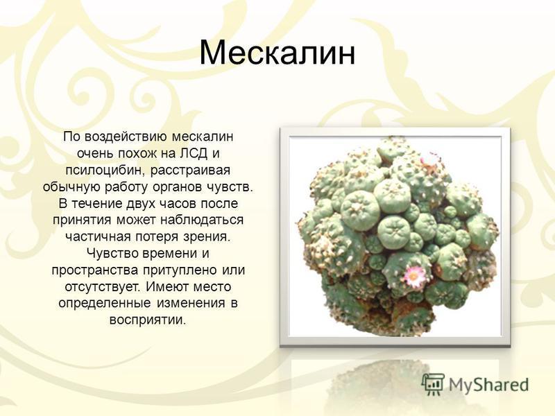 Мескалин По воздействию мескалин очень похож на ЛСД и псилоцибин, расстраивая обычную работу органов чувств. В течение двух часов после принятия может наблюдаться частичная потеря зрения. Чувство времени и пространства притуплено или отсутствует. Име