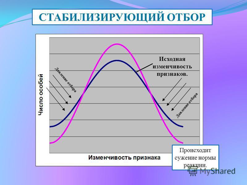 СТАБИЛИЗИРУЮЩИЙ ОТБОР Происходит сужение нормы реакции. Исходная изменчивость признаков. Давление отбора