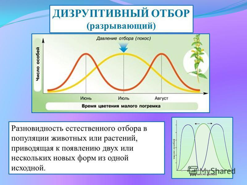 Сроки цветения и созревания семян у погремка лугового растянуты почти на все лето, причем большая часть растений цветет и плодоносит в середине лета. На сенокосных лугах получают преимущества те растения, которые успевают отцвести и дать семена до по