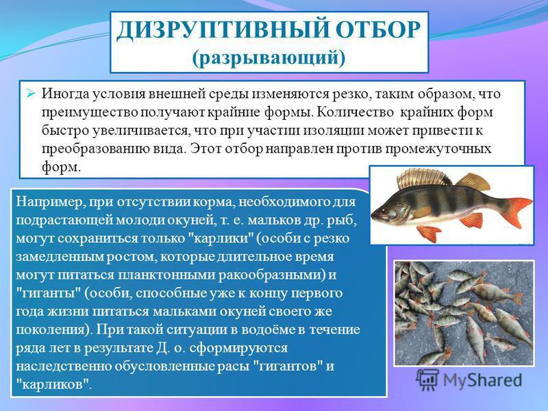 Например, при отсутствии корма, необходимого для подрастающей молоди окуней, т. е. мальков др. рыб, могут сохраниться только