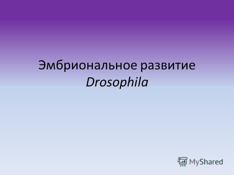 Эмбриональное развитие Drosophila