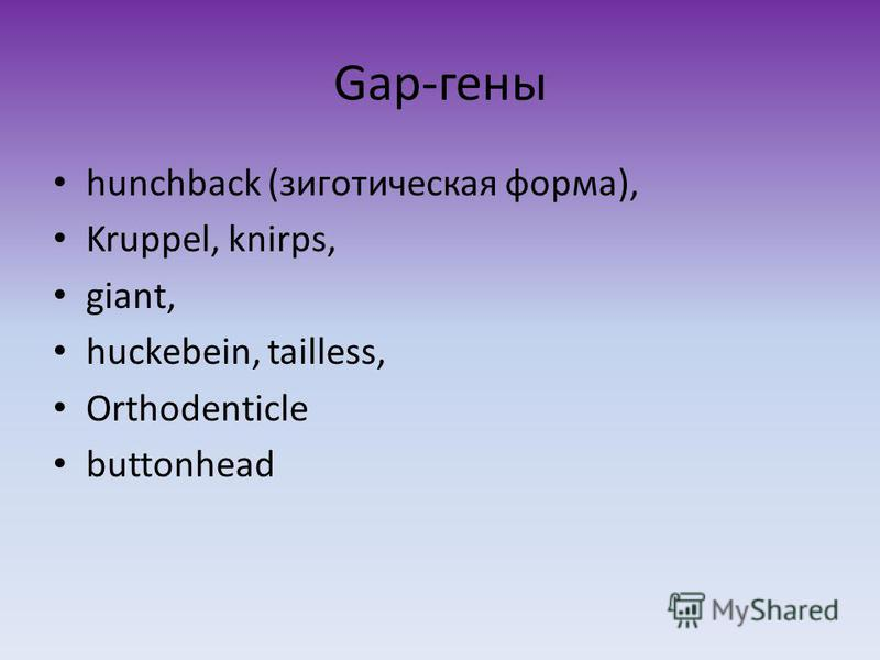 Gap-гены hunchback (зиготическая форма), Kruppel, knirps, giant, huckebein, tailless, Orthodenticle buttonhead