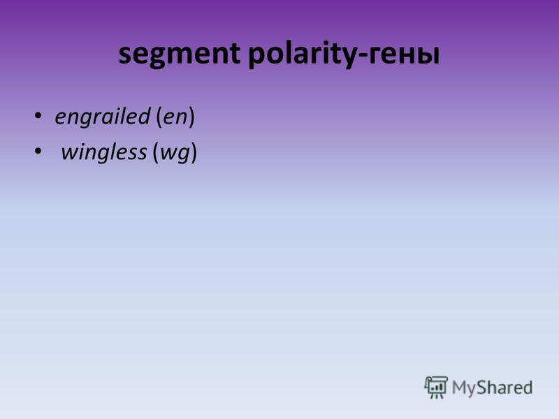 segment polarity-гены engrailed (en) wingless (wg)