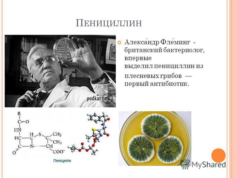 П ЕНИЦИЛЛИН Александр Флеминг - британский бактериолог, впервые выделил пенициллин из плесневых грибов первый антибиотик.