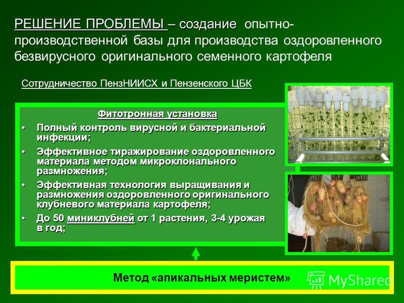 Метод «апикальных меристем» Фитотронная установка Полный контроль вирусной и бактериальной инфекции;Полный контроль вирусной и бактериальной инфекции; Эффективное тиражирование оздоровленного материала методом микроклонального размножения;Эффективное