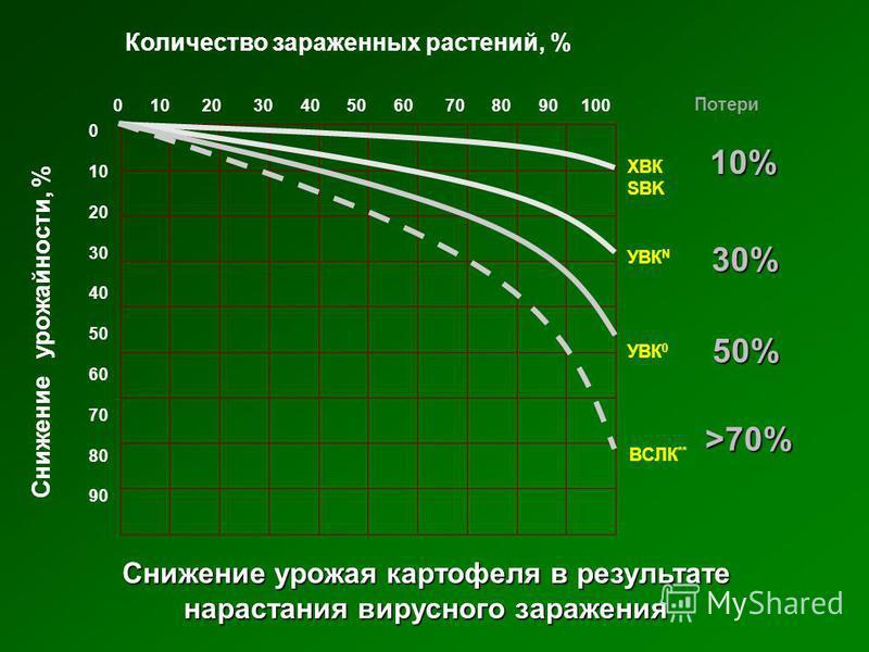 Потери 10% 50% >70% 30% 0 10 20 30 40 50 60 70 80 90 100 0 10 20 30 40 50 60 70 80 90 ХВК SBK УВК N УВК 0 ВCЛК ** Снижение урожайности, % Количество зараженных растений, % Снижение урожая картофеля в результате нарастания вирусного заражения