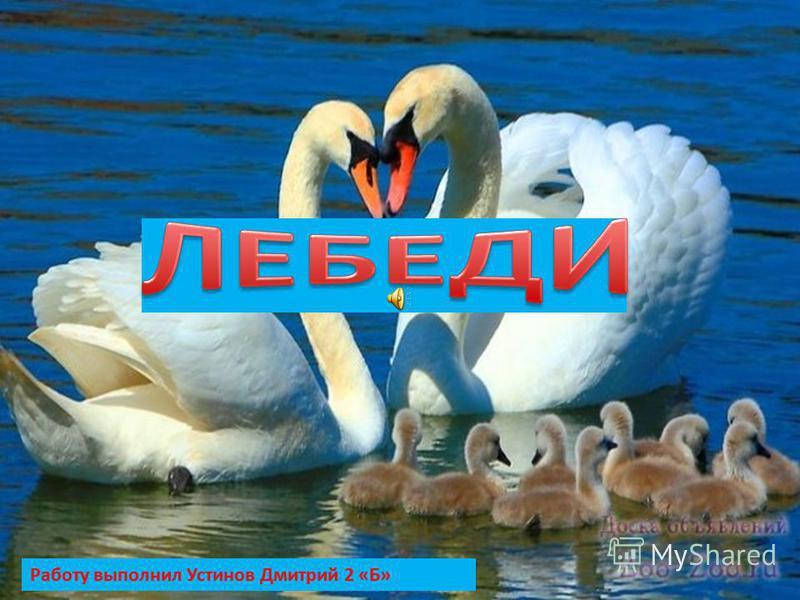 Работу выполнил Устинов Дмитрий 2 «Б»