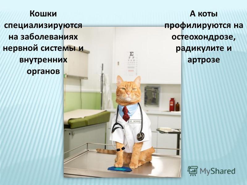 Кошки специализируются на заболеваниях нервной системы и внутренних органов А коты профилируются на остеохондрозе, радикулите и артрозе