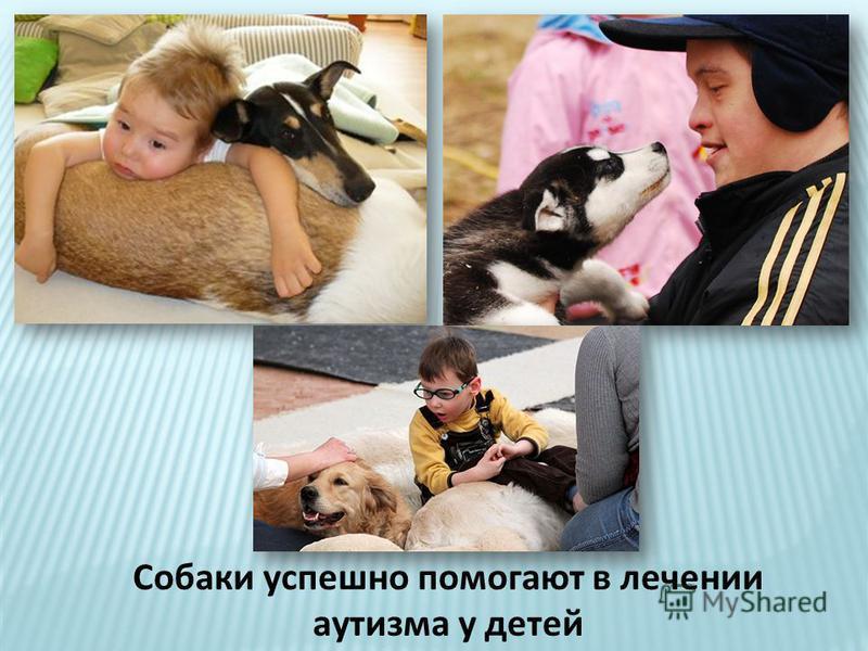 Собаки успешно помогают в лечении аутизма у детей