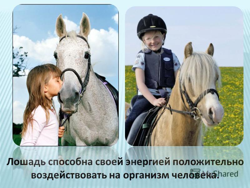 Лошадь способна своей энергией положительно воздействовать на организм человека.