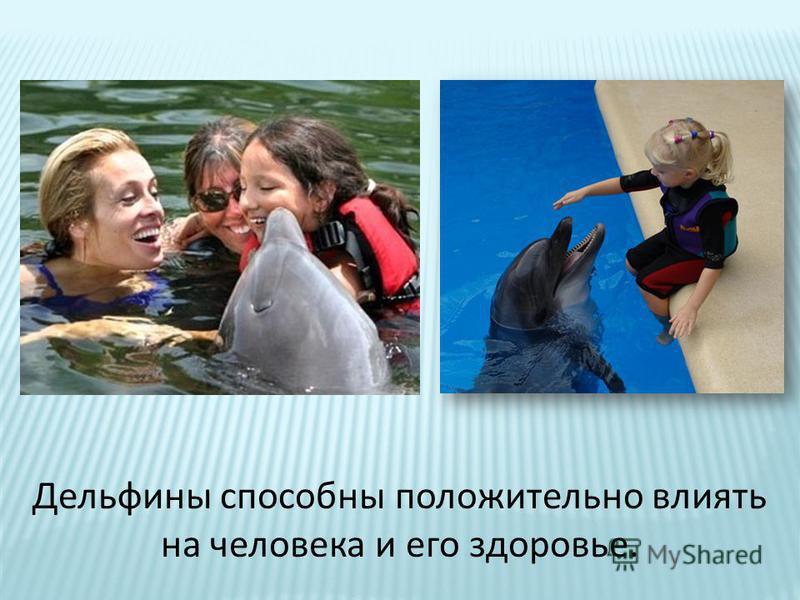 Дельфины способны положительно влиять на человека и его здоровье.