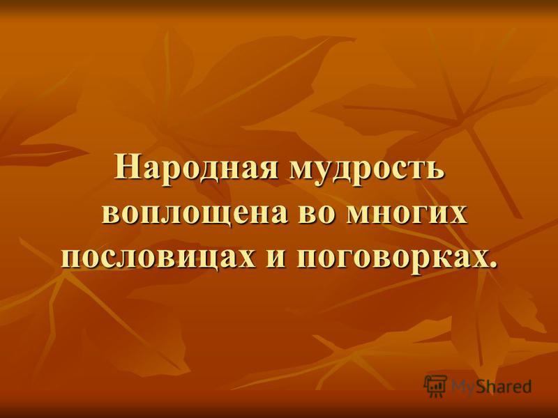 Народная мудрость воплощена во многих пословицах и поговорках.