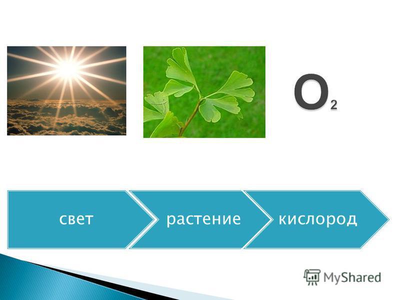 свет растение кислород